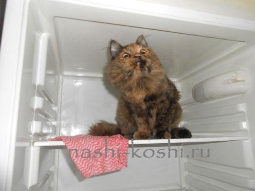 кошка в жару