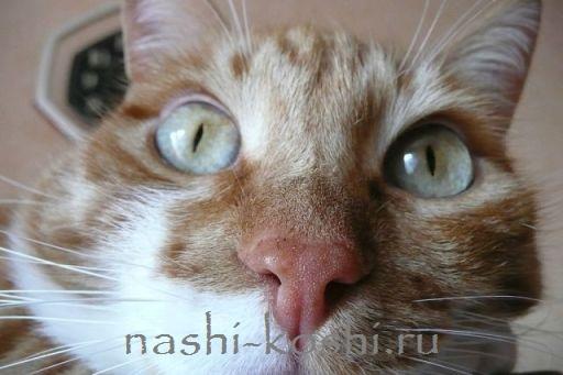 Все о кошачьем носе