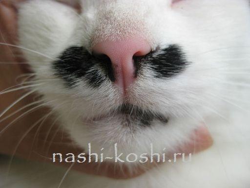 мокрый или сухой нос у кошки