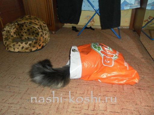 откуда достают кота