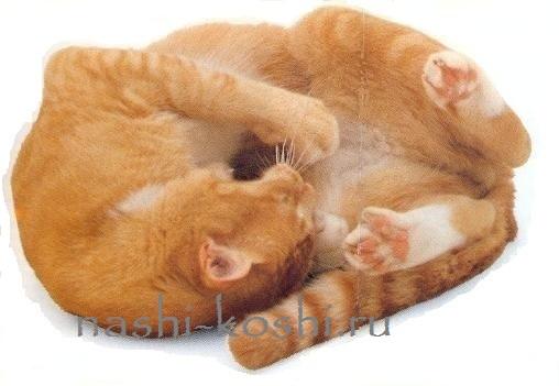 красный окрас у кошек