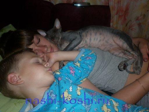 можно ли спать с кошкой