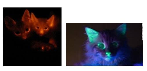 светящиеся кошки