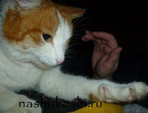 царапины от кошки