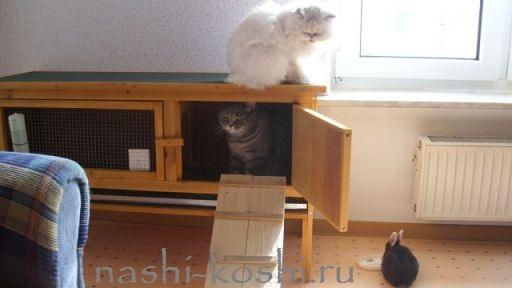 передержка; гостиница для кошек