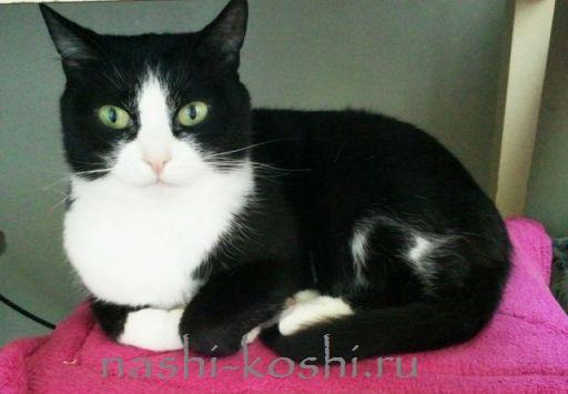 смокинг-кошки
