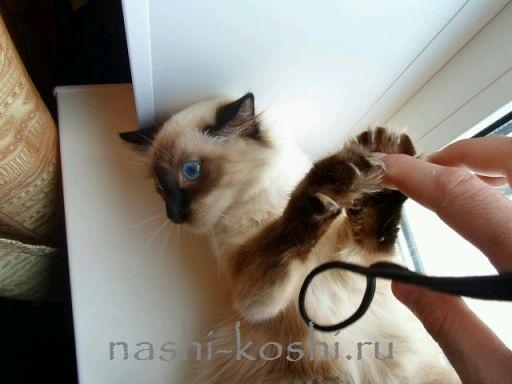 Как отучить котенка кусаться и царапаться | Все о кошках