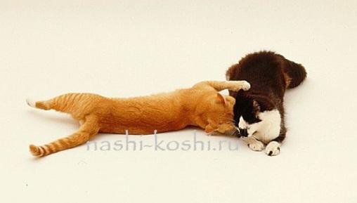 вязка кошек