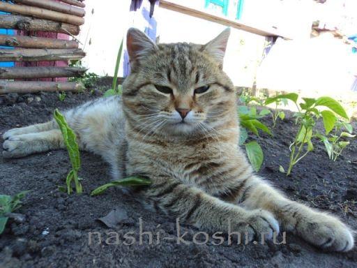 заразиться глистами от кошки