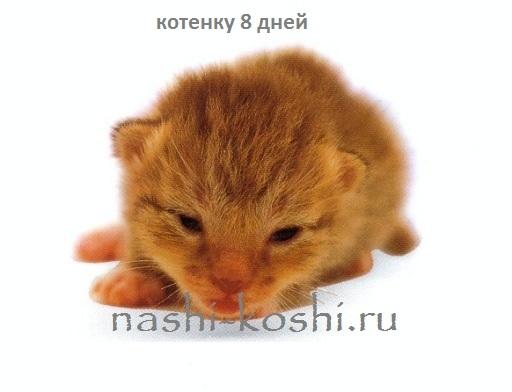 развитие и вес котят по дням, неделям и месяцам