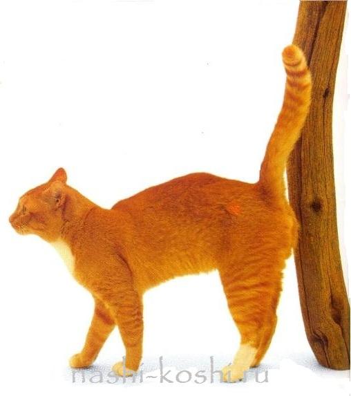 как отучить кота метить