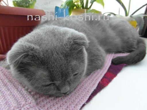 воспаление матки у кошек