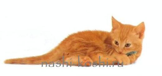 бесплатные котята (кошки)