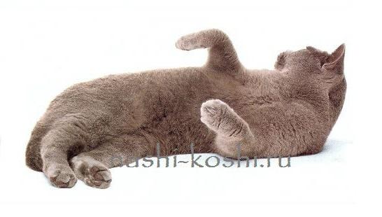 бесплатные кошки