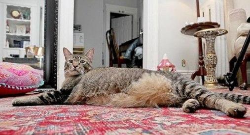 огромный кот - котозавр