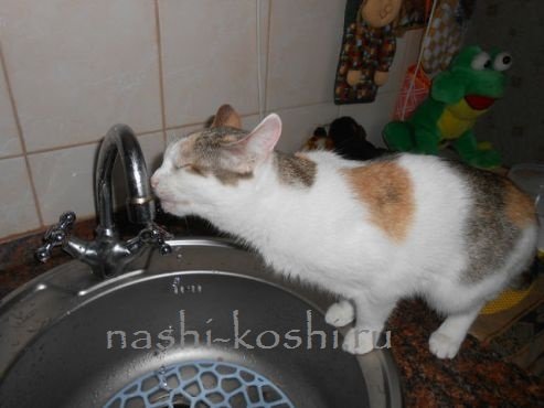 обезвоживание у кошек