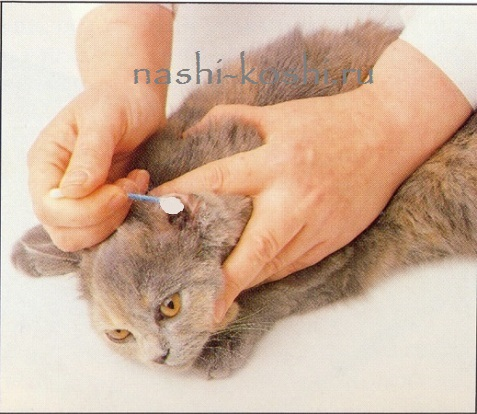как чистить кошке уши