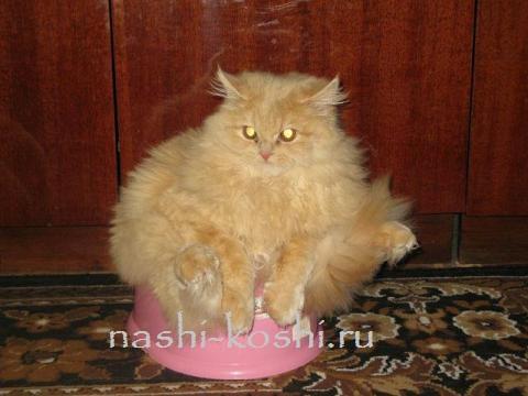 запор у кошек - лечение