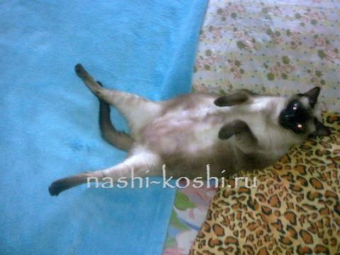 живот кошки
