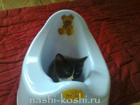понос у кошки - что делать