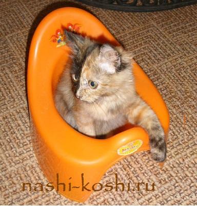 понос у кошки – лечение