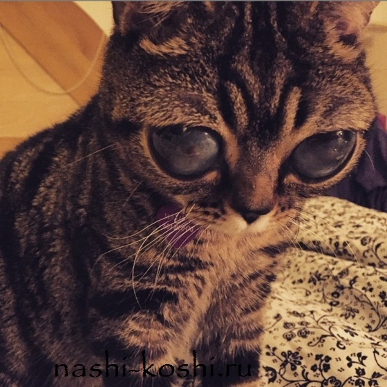 инопланетная кошка Матильда