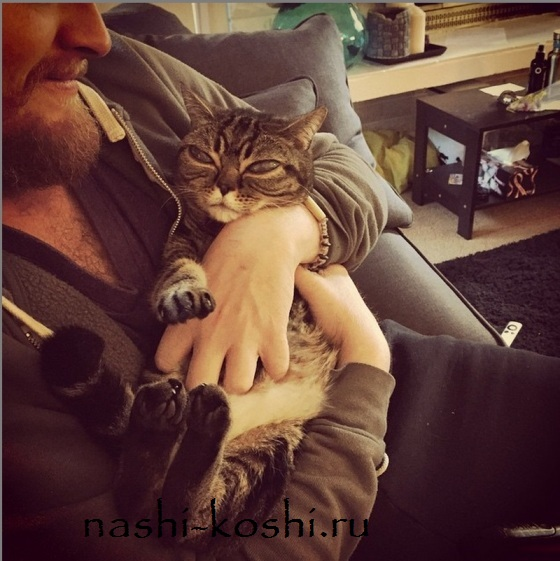 кошка-инопланетянка Матильда