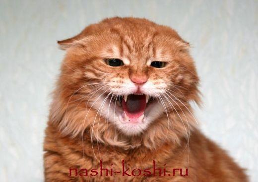бешенство у кошек – симптомы