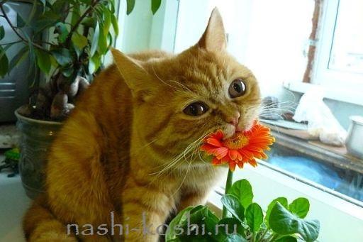 анафилактический шок у кошек