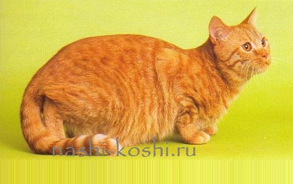 Шишки у кошки