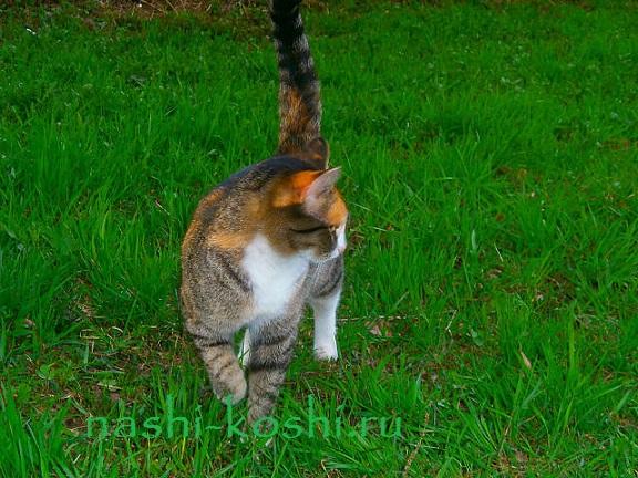 выпускать ли кошку на улиц