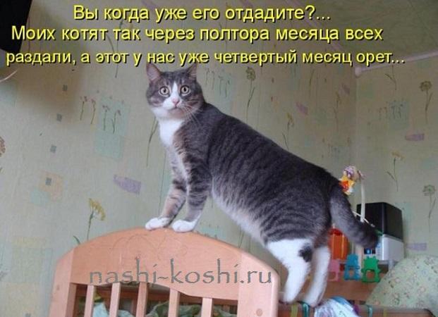 Кошки и дети - знакомство