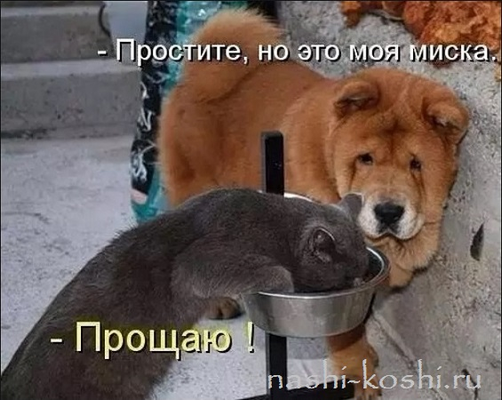 можно ли кошке собачий корм