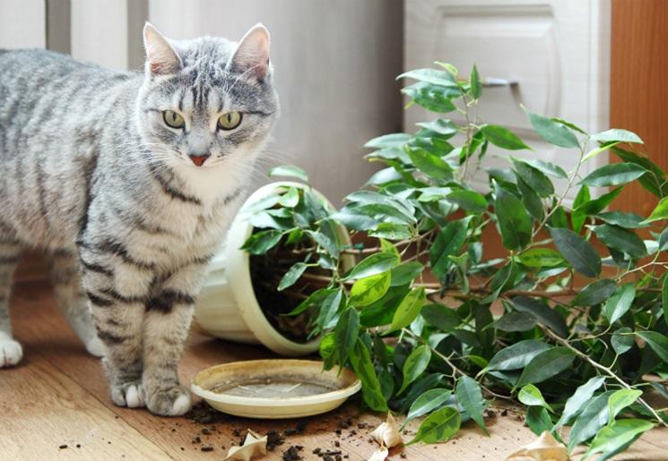 Комнатные растения и кошки: безопасное соседство